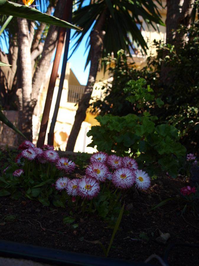 Fotograf as j l casas jardineria a domicilio - Jardineros a domicilio ...
