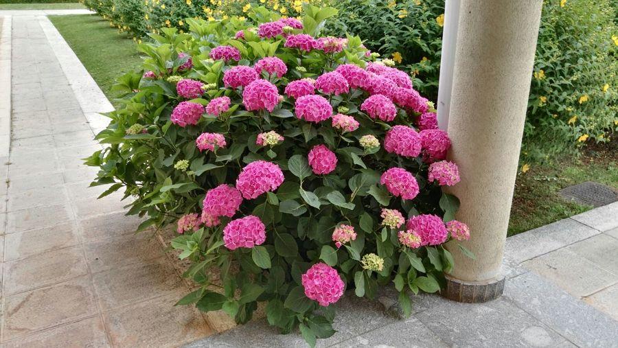 Plantas en nuestro jardín