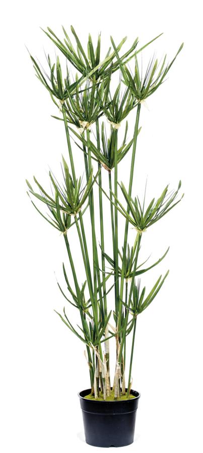foto planta papiro artificial de