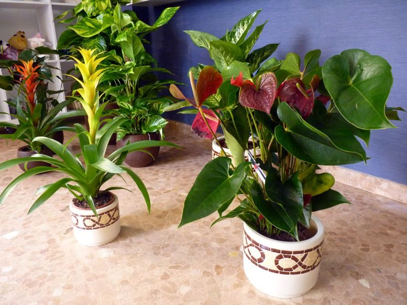 foto plantas ornamentales de floristeria muguet alzira