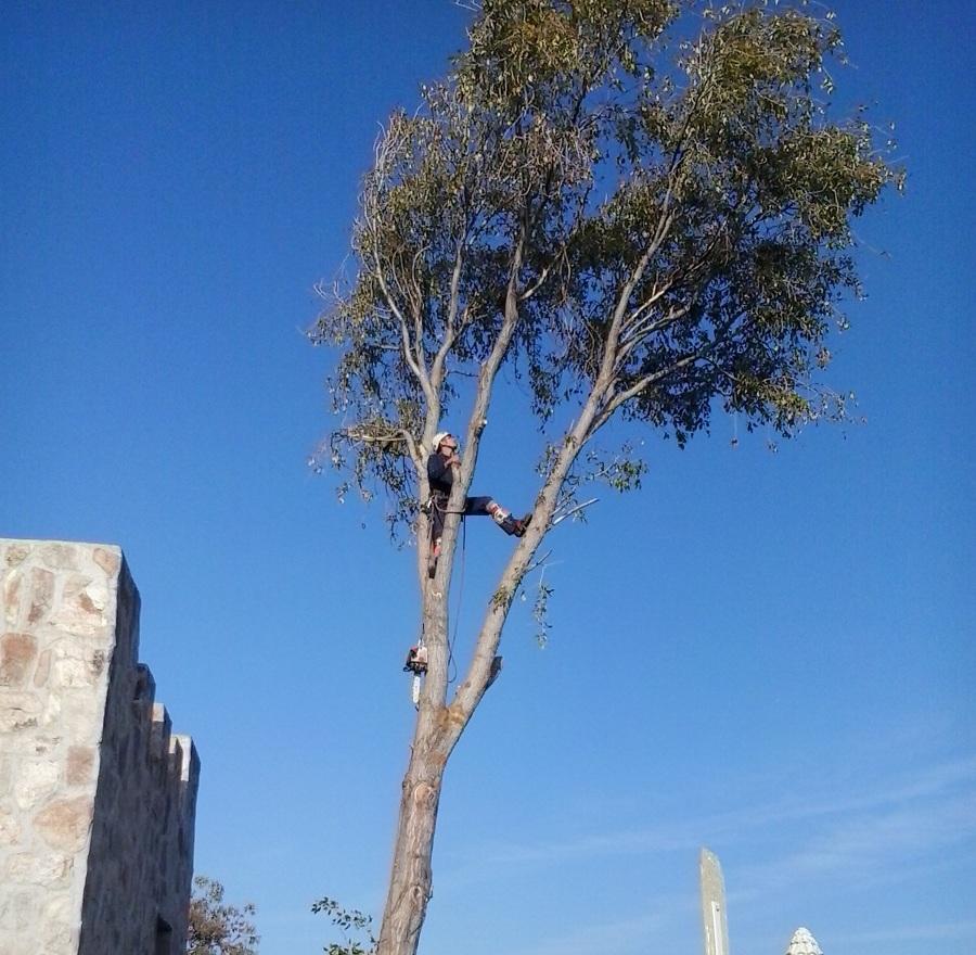 foto poda y tala de rboles de jardineria natur 699089