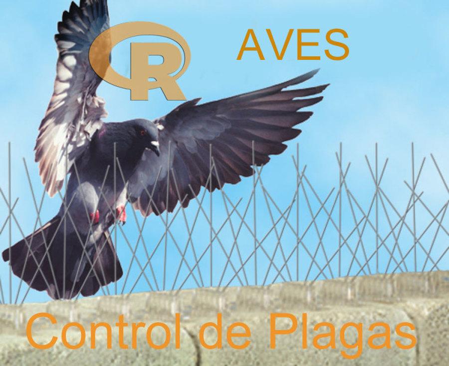 Radica Control de Plagas