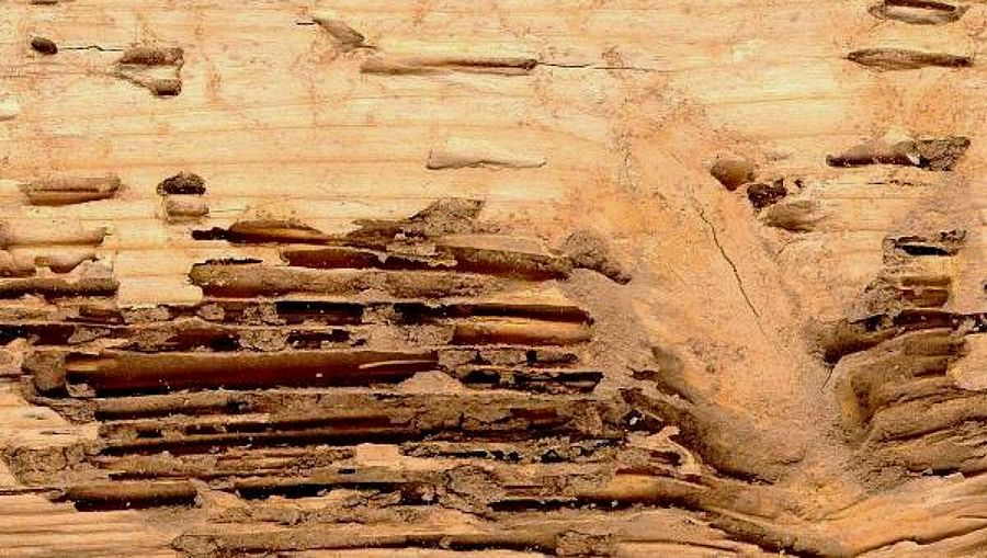 daños termitas en madera