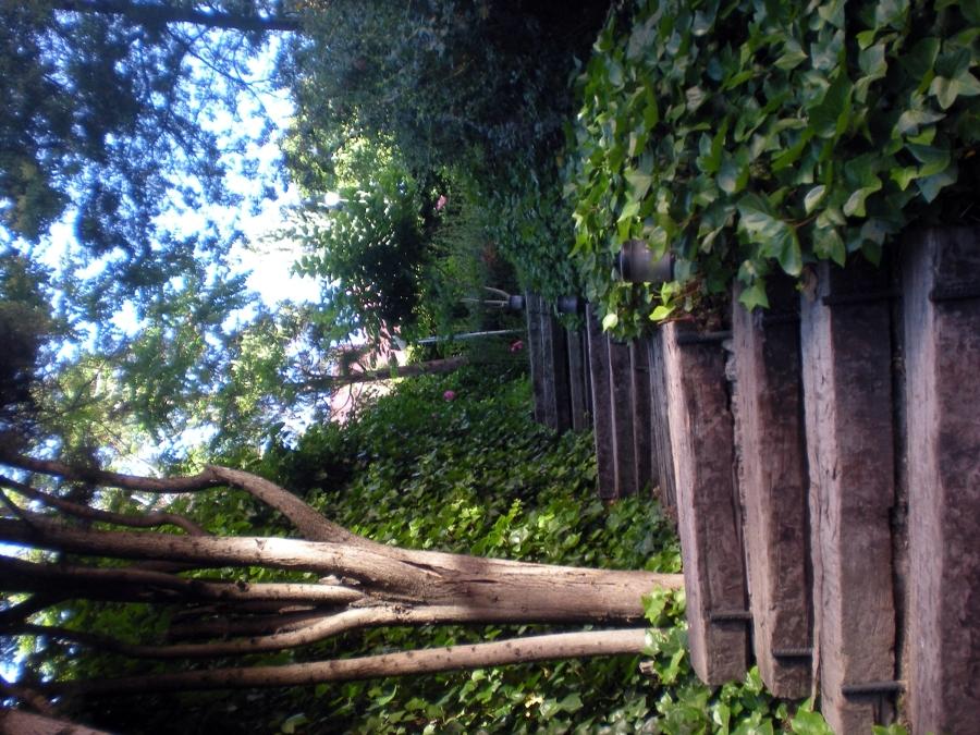 Foto trabajo de jardineria de sevicios integrales - Trabajo jardineria madrid ...