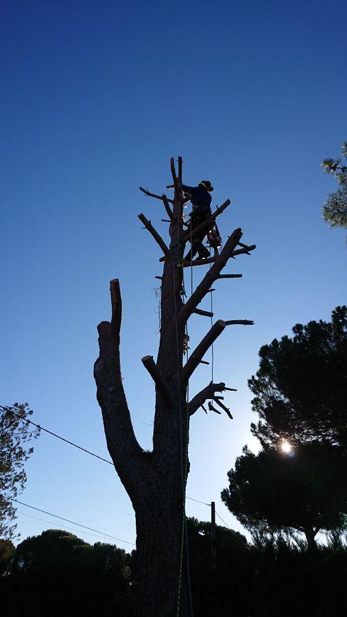 Foriñaki Arborista