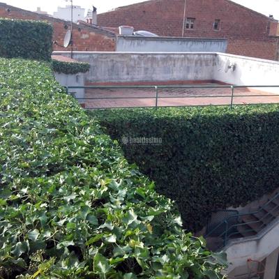 Jardineros, Tala Árboles, Mantenimiento Jardines