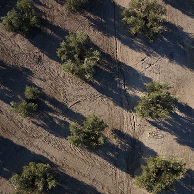 Ortofotografía de finca de olivar