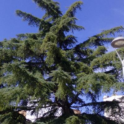 Jardín Podar pinos