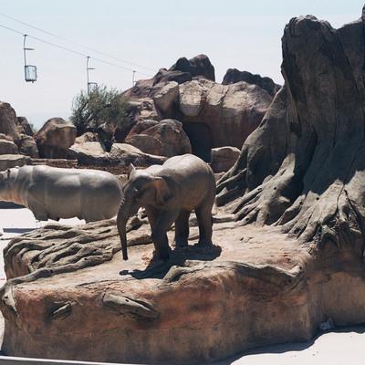 reproduccion animales elefante