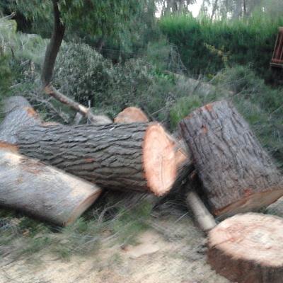 Troceado de troncos.