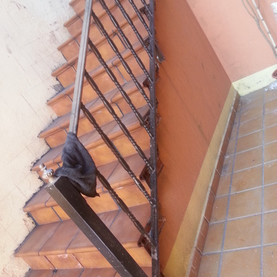 replanteo de escaleras y colocacion de gres