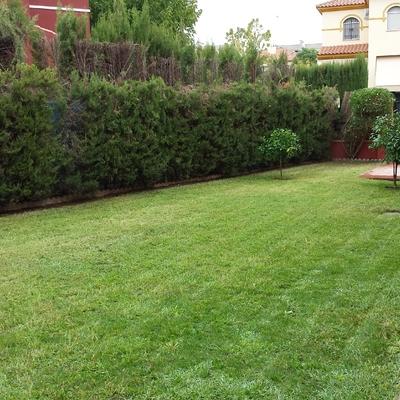 Puesta apunto jardín en Espartinas Sevilla.