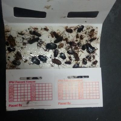 Monitorizacion cucarachas