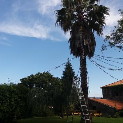 Limpieza de hojas secas de palma - escalera o alpino