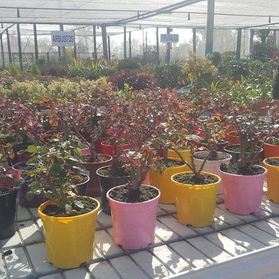 Rosales, arbustos y trepadoras