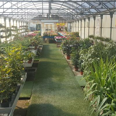 Plantas y flores de interior