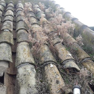 Limpieza y reparación de tejado con teja árabe.