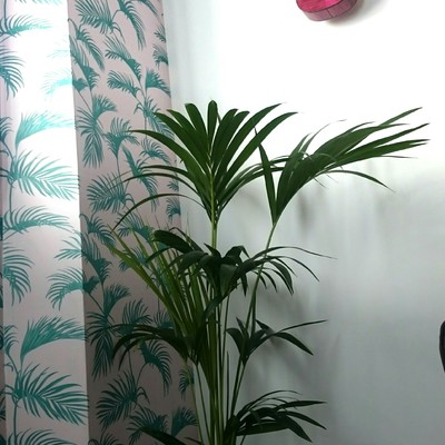 PAPEL TROPICAL