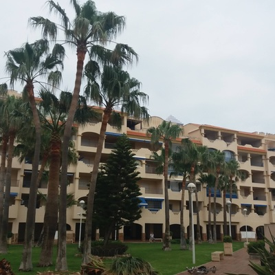 Poda de palmeras en residencial