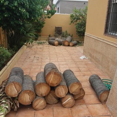 Tala controlada por secciones de palmera washingtonia de gran altura