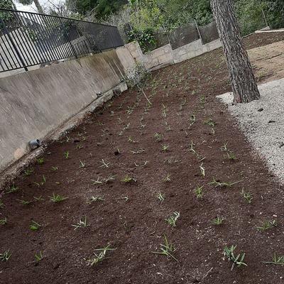 Después siembra de Césped y grama