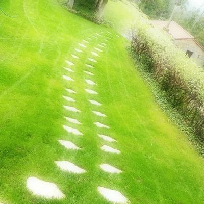 Jardín con pasos japoneses