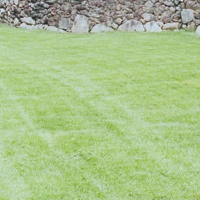 Mantenimiento de jardines.