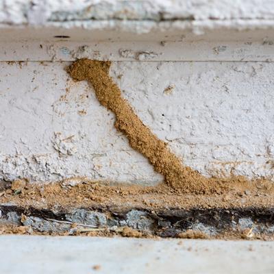 canales de progresion termitas