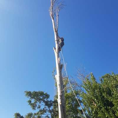 Tala árboles