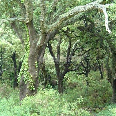 madrid forest madrid