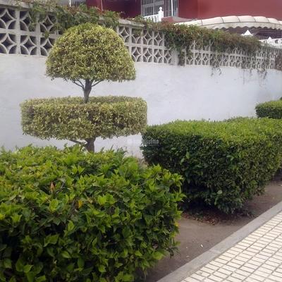 Jardineros, Mantenimiento Piscinas, Mantenimiento Comunidades