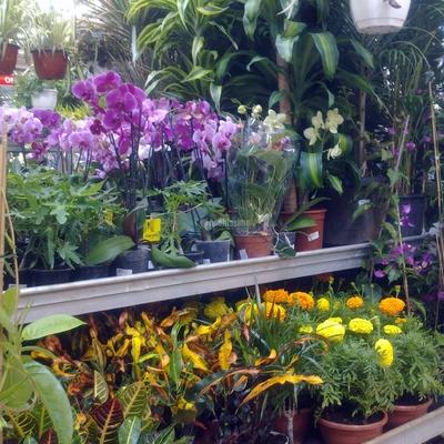 Jardineros, Mantenimiento Comunidades, Mantenimiento Piscinas