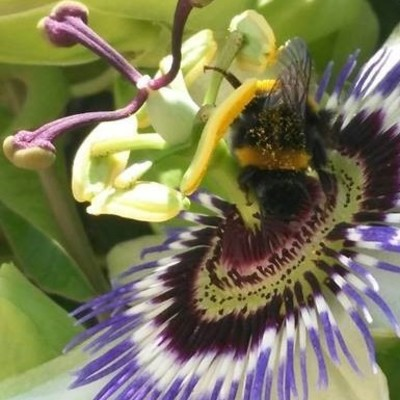 Retirada de panales de abejas