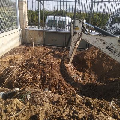 Sacar todas las raices y limpiar zona