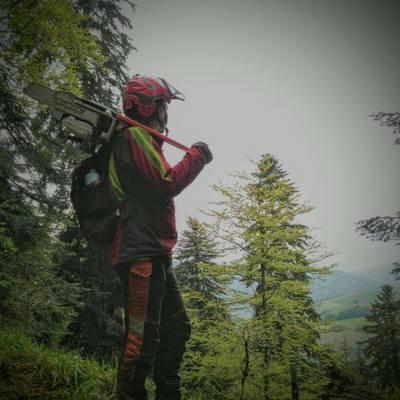 Trabajos forestales