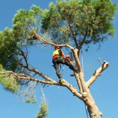 Tala controlada pino entre caravana y casita jardín