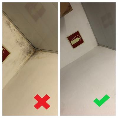 Higienizado y eliminado de humedades de la pared.