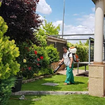 Jardineros bonsai