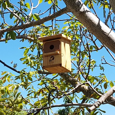 Caja nido páridos