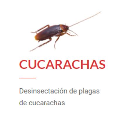 Desinsectación de Cucarachas