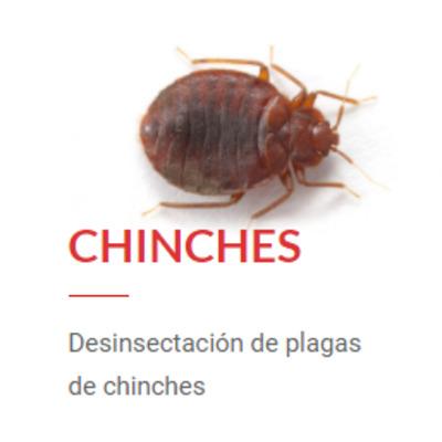 Desinsectación de Chinches