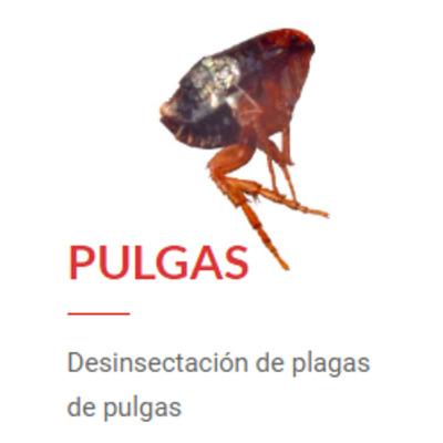 Desinsectación de Pulgas
