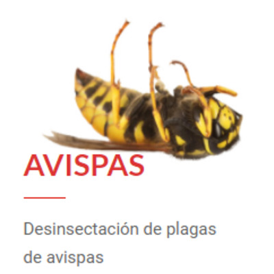 Desinsectación de Avispas