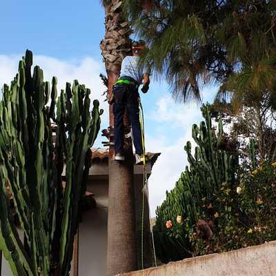 Limpieza de troncos de palmeras