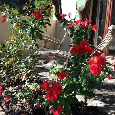 Da color a tu jardin!