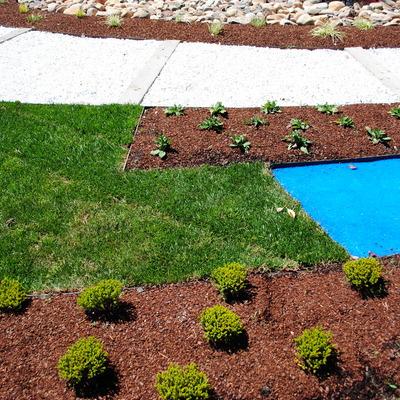 Plantación en colores frios