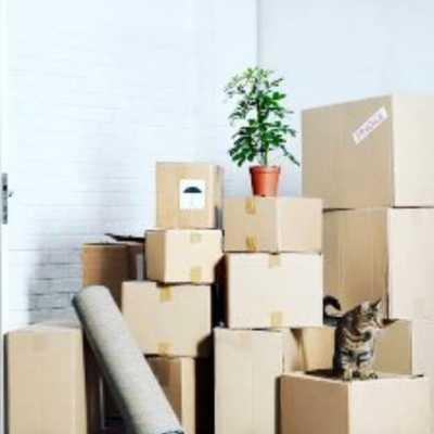 empaquetado de cajas