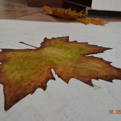Pavimento decoration
