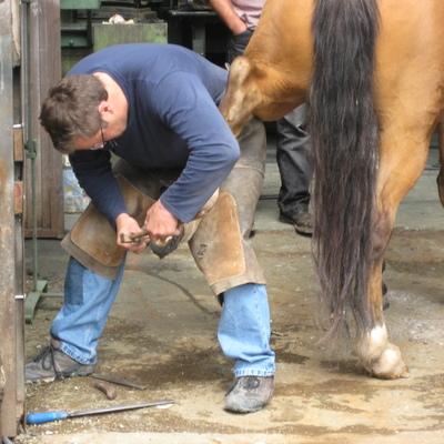 Heratje Cavallos