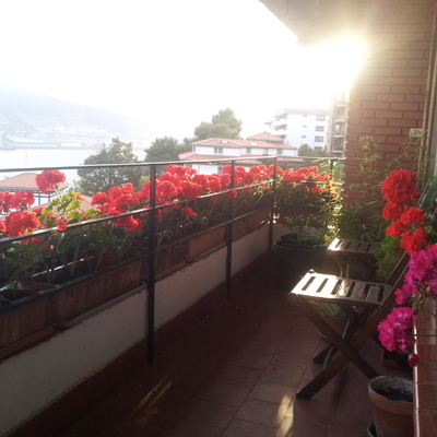 Geranios en la terraza de un piso en Algorta, Getxo.